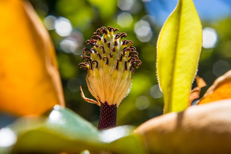 crop-for-improved-composition-magnolia