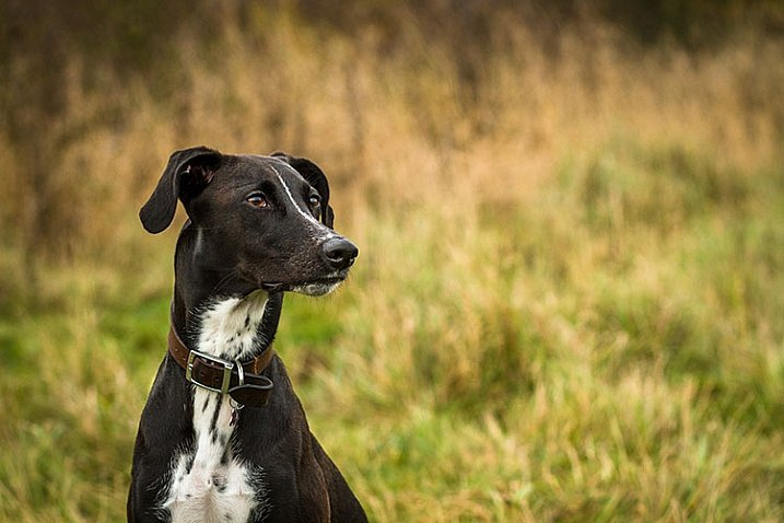 pet-photography-to-improve-camera-skills